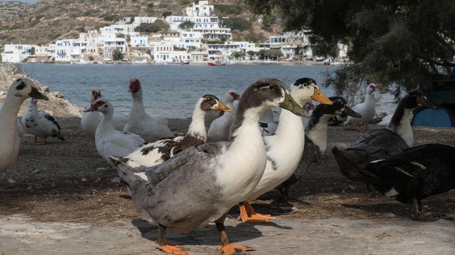 Amorgos Amorgosisland Architecture Day Greece Mediterranean Sea Nature No People Outdoors