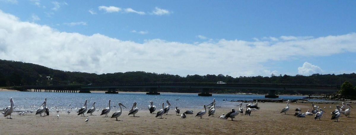 Australian Landscape Beauty In Nature Bird Birds Cloud Cloud - Sky Cloudy Day Idyllic Mogareeka Mountain Mountain Range Nature No People Outdoors Pelicans Scenics Sea And Sky Sea Birds Sky Tathra Tranquil Scene Tranquility Under The Bridge Water