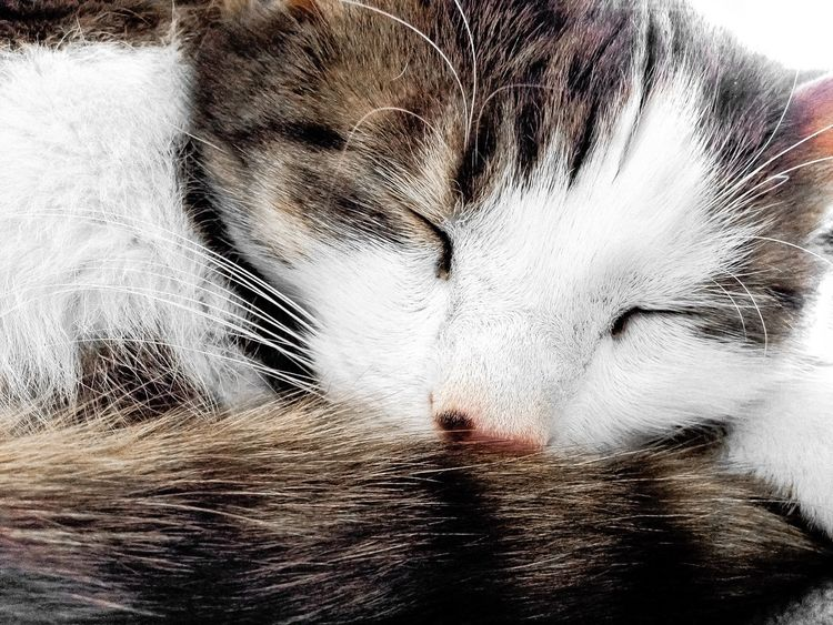 All CAT Sharp Close Cat Pets Domestic Animals One Animal Animal Themes Mammal Domestic Cat Sleeping Animal Hair Eyes Closed  Close-up Indoors  No People Relaxation Feline Portrait Day