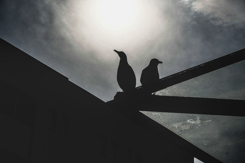 Bird Vertebrate Animal Animal Themes Animal Wildlife Animals In The Wild Low Angle View Silhouette Sky Architecture Perching One Animal Nature Built Structure No People Day Outdoors Building Exterior Sunlight Roof