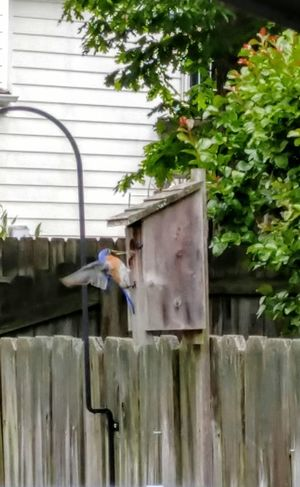 Bluebird Birdhouse Outside Photography Nature Photography Check This Out No People Virginia Chesterfield Lg10