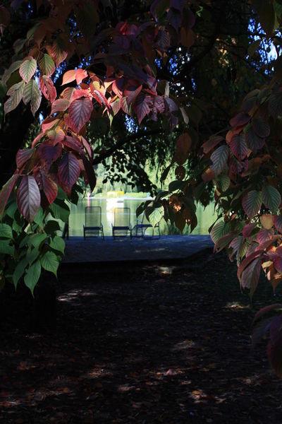 Bäume Chair Chilling Erholung Erholung Pur Erholungspark Licht Und Schatten Light And Shadow Nature Parc Park Pond Rest Stuhl Teich Tree Wasser