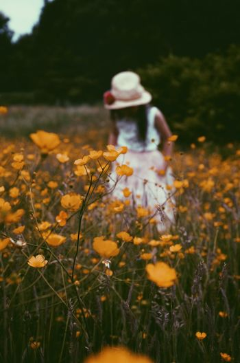 Girl Standing Amidst Yellow Flowers On Field