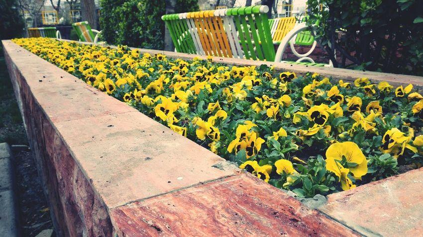 A Good Day It Is.! Best Eyeem Shots Spring Flowers Mashhadcity