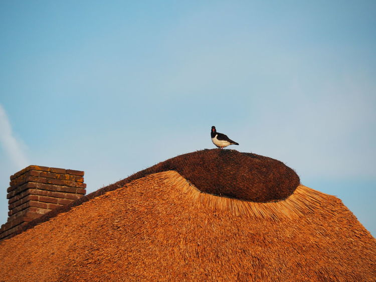 Chimney Animals In The Wild Bird No People One Animal Sky Thatch Thatched Roof No Filter No People Sky The Week On EyeEm