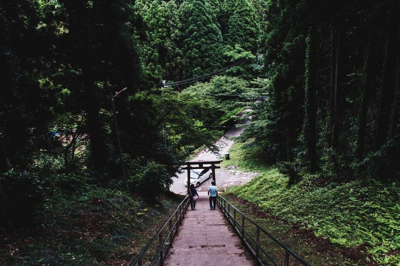 High Angle View Of Man And Woman Moving Down On Staircase Amidst Trees