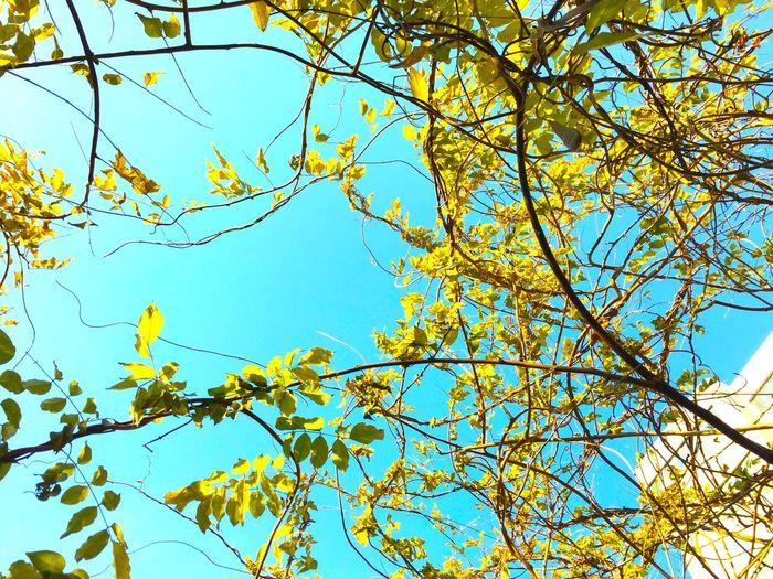 Sufe Sky And Trees