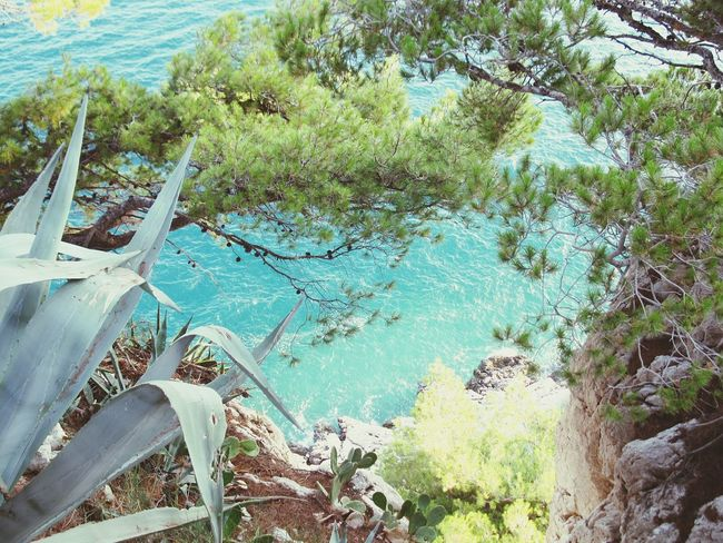 View from a cliff in to the sea in Makarska, Croatia - Blue Tree Water Outdoors No People Nature Beauty In Nature Plants 🌱 Cliff Azure Holidays Sea Croatia Makarska Summer Landscape EyeEmNewHere Backgrounds Tropical Betterlandscapes Miles Away Flying High Travel The Great Outdoors - 2017 EyeEm Awards BYOPaper! EyeEm Selects Done That. Lost In The Landscape Perspectives On Nature Summer Exploratorium