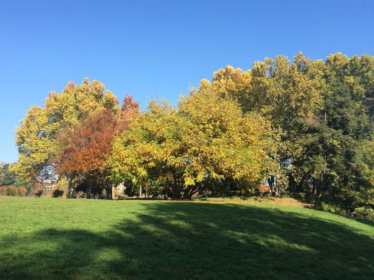 Autumn Colors Io Amo Torino Parco Valentino