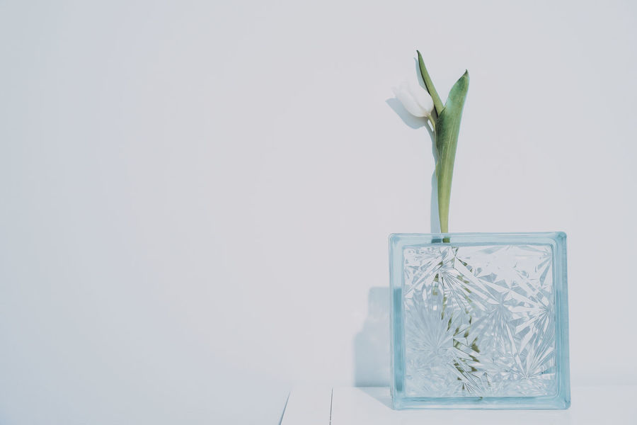 Blue Monday Interior Arrangement Glass Geometry Geometric Shape Flower Minimalism Minimal Tulip White Flower White Tulip Single Flower White Background Studio Shot Copy Space Close-up Flower Head Frosted Glass