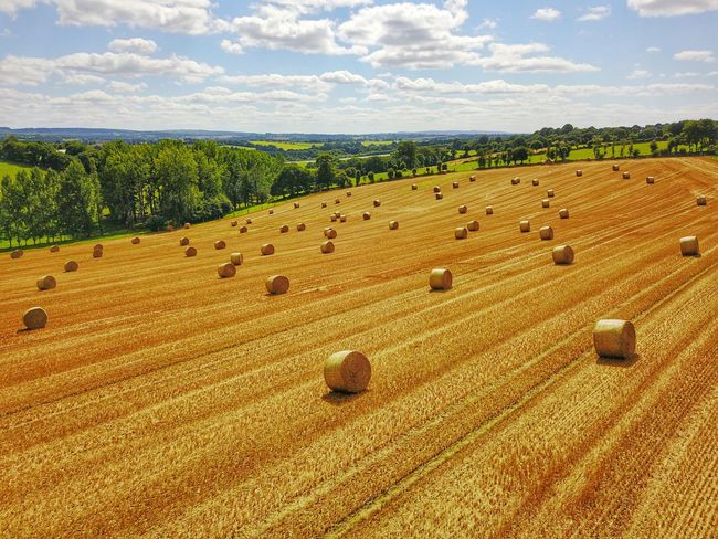Maël-carhaix Brittany Agriculture Aerial View Rural Scene Bale  Harvesting Field Farm Crop  Cloud - Sky Sky Tranquil Scene Tranquility Hay No People Landscape Tree Nature Scenics Day Beauty In Nature Hay Bale