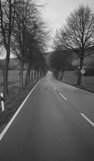 View of country road along bare trees