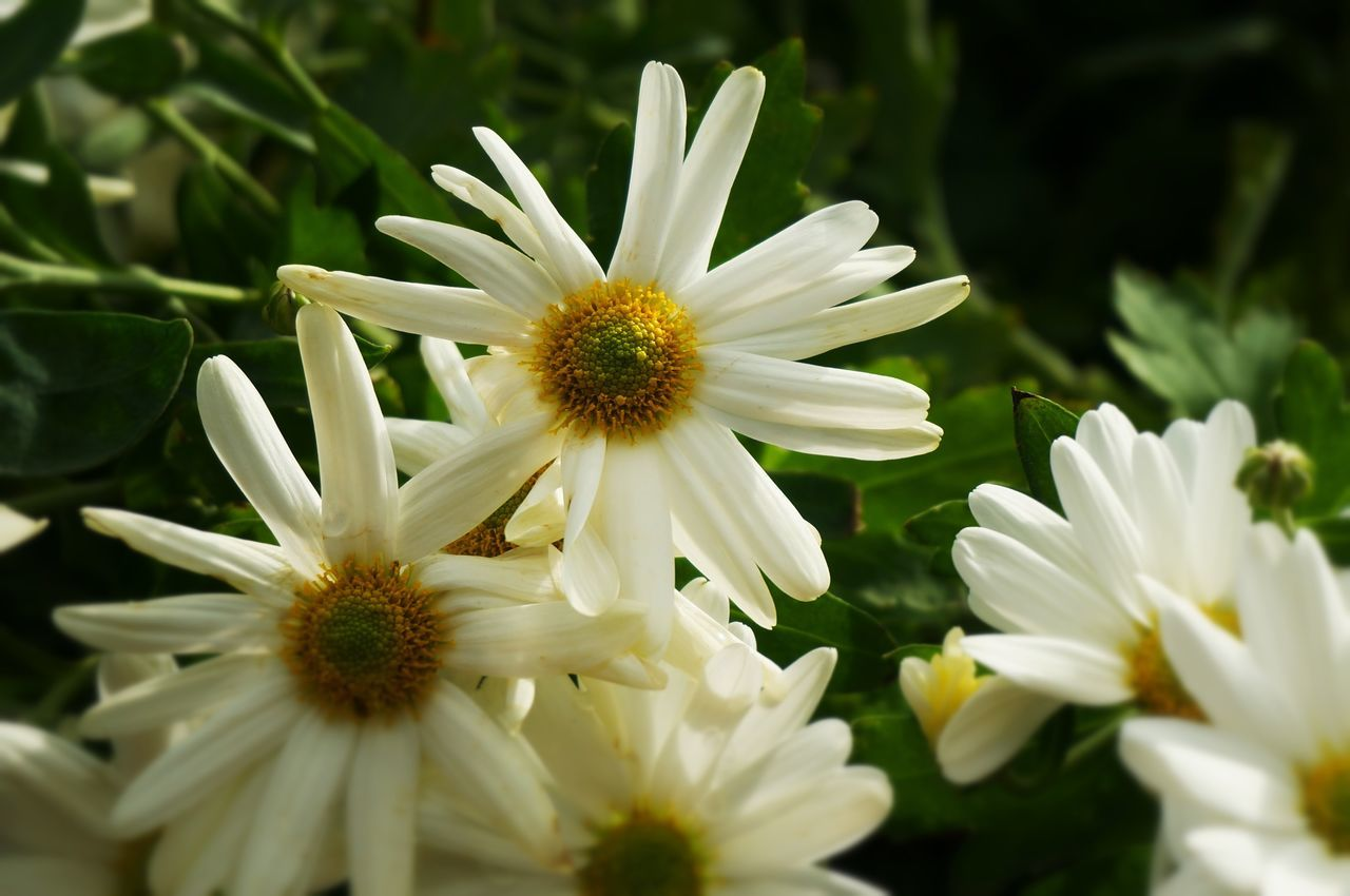flower, petal, white color, nature, beauty in nature, fragility, freshness, flower head, growth, plant, no people, blooming, outdoors, day, close-up