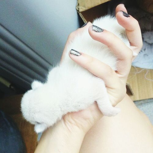 baby cat ?? Kitty!  SB