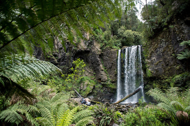 Jungle Rainforest Australia Nature Forest Wildlife Wild Victoria Plant Tree Waterfall Water Land Rock Scenics - Nature No People Animal Wildlife Rock - Object Animal Motion Solid Beauty In Nature Environment Day Animal Themes Outdoors WoodLand Flowing Water