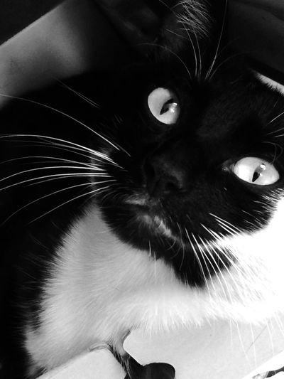 My cat KETYA in b&w photos Animal Themes Black & White Black Cat Photography Black Color Blackandwhite Blackandwhite Photography Cat Black & White Cat Lovers Cats Of EyeEm Cat♡ Domestic Animals Domestic Cat Feline Ketika Looking At Camera No People One Animal Pets Portrait Whisker EyeEm Ready