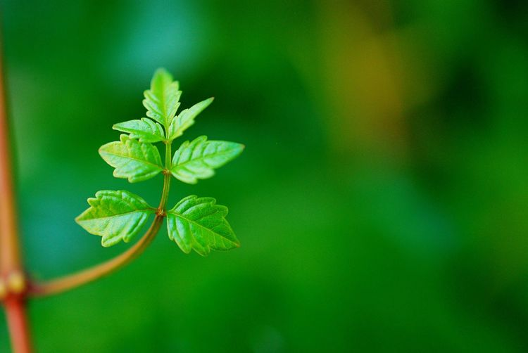 Morning in the gently EyeEmNewHere Leaf Plant Part Plant Green Color Growth Close-up Beauty In Nature Nature No People Outdoors Green Tree