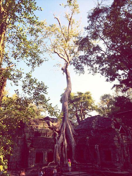 Ta Phrom - Cambodia Trees Traveling Temple