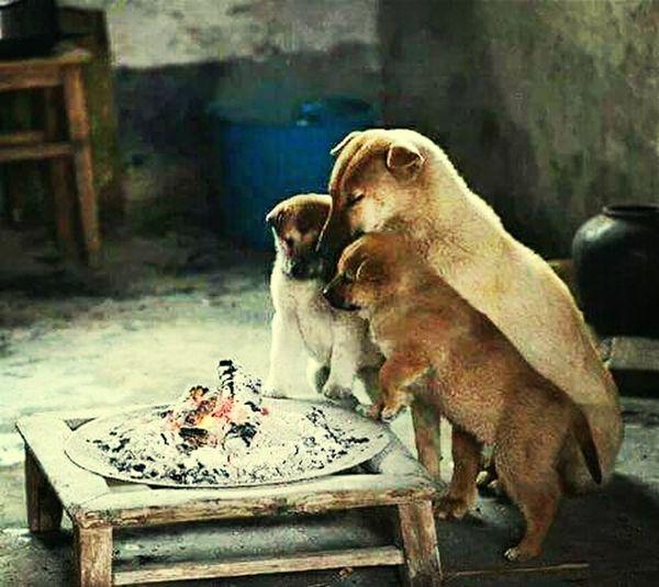 Blackandwhite Monochrome Changing The World Dog Love
