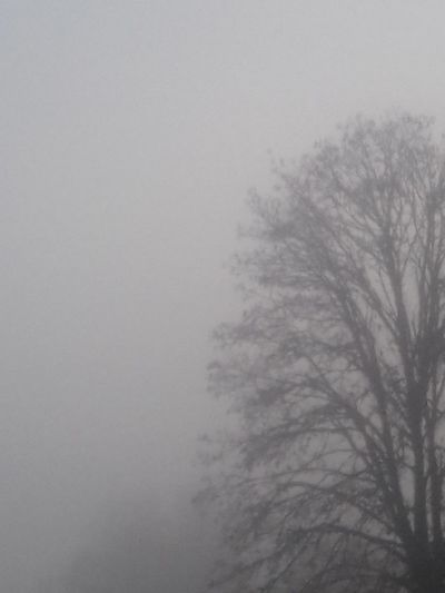 Fog No People Tree Winter Cold Temperature Bare Tree Nature Outdoors Beauty In Nature Day Sky