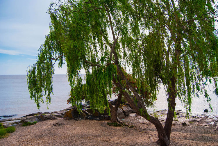 Peaceful place at the shore Tree Plant Water Beauty In Nature Tranquility Scenics - Nature Tranquil Scene Sky Sea Nature Beach No People Day Non-urban Scene Green Color Horizon Over Water Outdoors Idyllic Land Growth Horizontal Peaceful Shore Colonia Del Sacramento - Uruguay