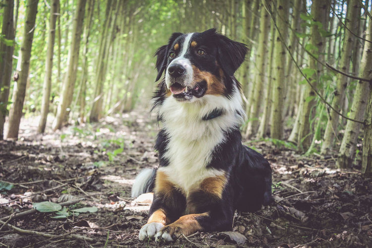 Neo Nature Hund