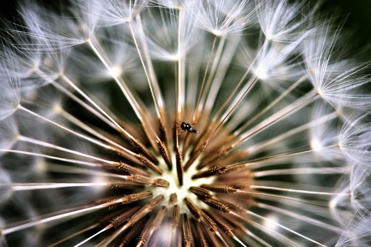 Full Frame Shot Of Dandelion