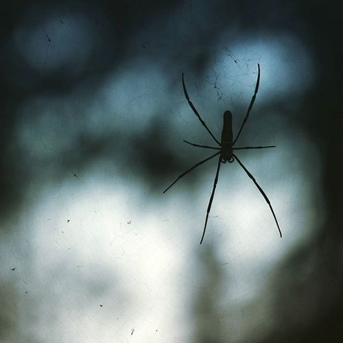 The Dark Knightmare Spider Abugslife Contrast Silouette araña darkknight nightmare