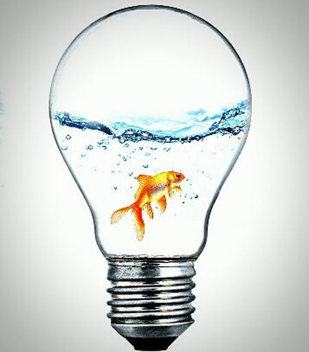 ...there's plenty of fish in the sea, but only one for me Gold Fish Lightbulb Imagination Is Key Imagine