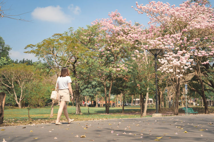 Rear view of woman walking on cherry blossom