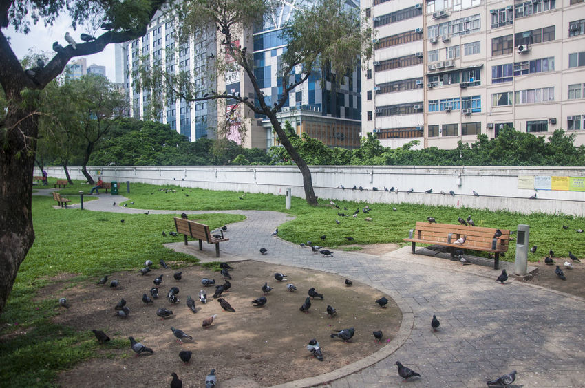 Animal Aves Bird Hong Kong Kowloon Park Park Pigeon Tourist Attraction