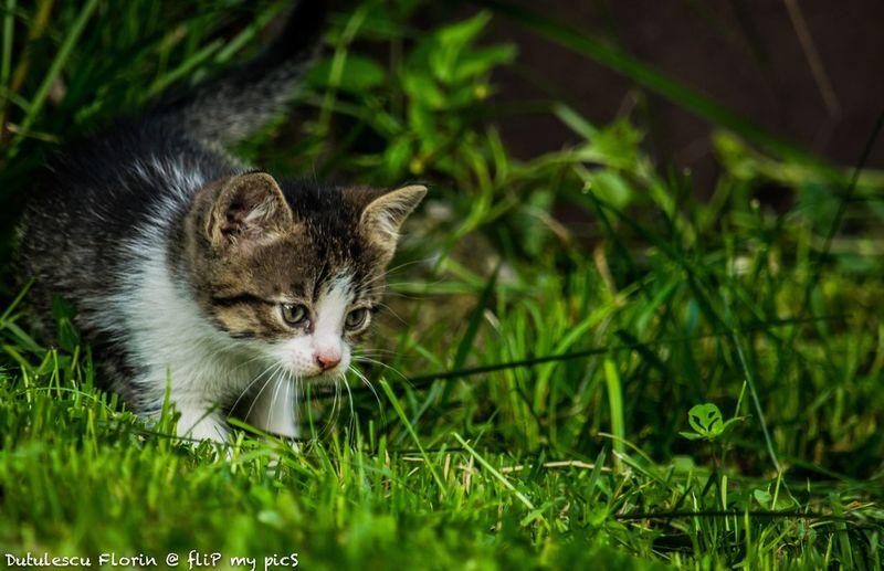 Cat Curiosity
