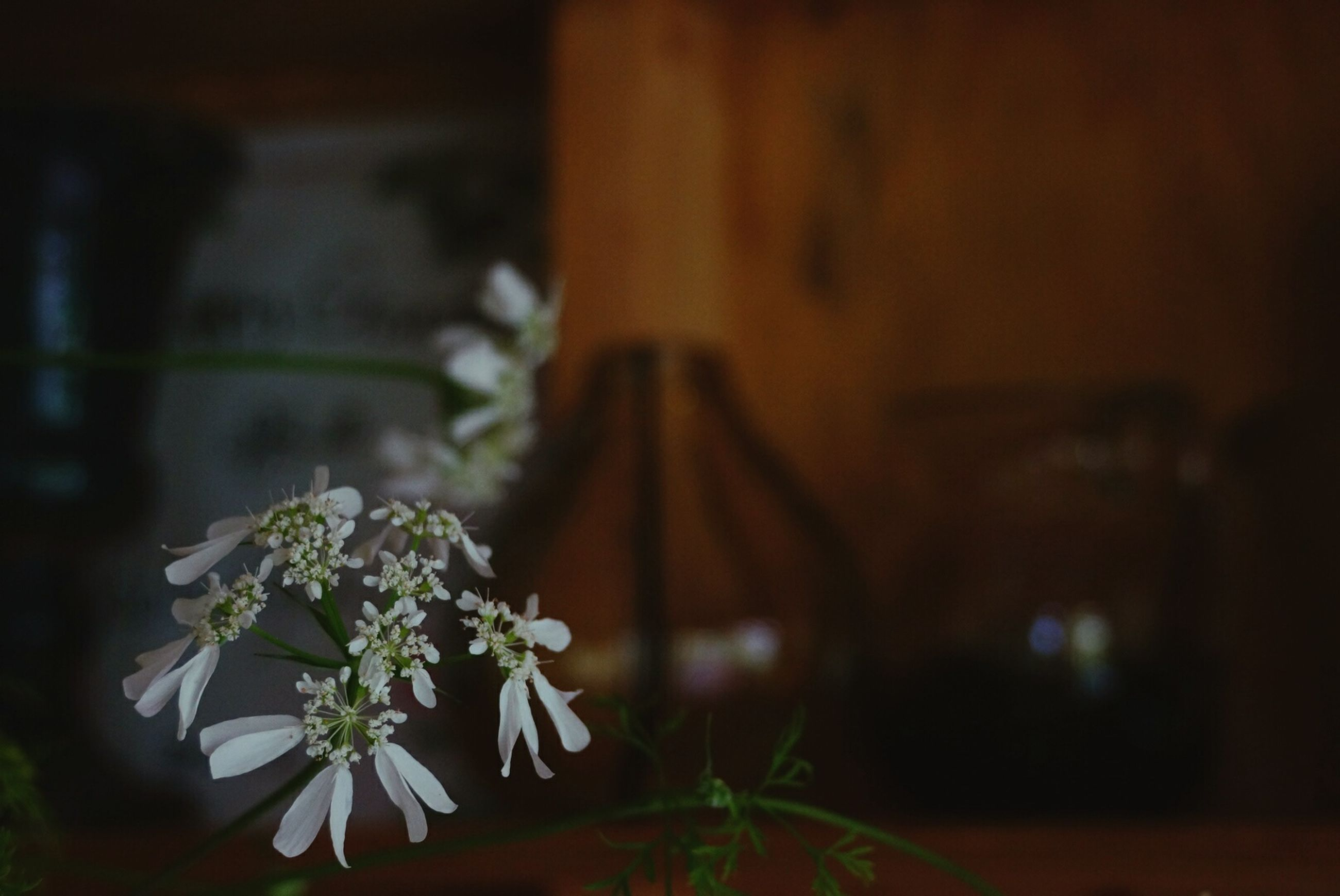 focus on foreground, flower, plant, selective focus, growth, close-up, nature, fragility, night, no people, outdoors, built structure, stem, beauty in nature, front or back yard, tree, freshness, white color