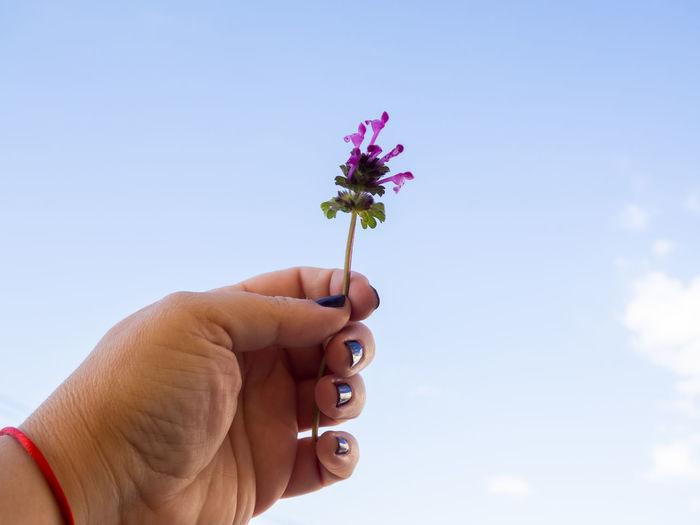 Hand holding flower against sky