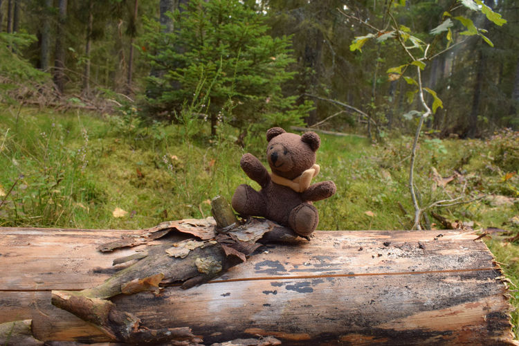 Teddy bear in forest Teddy Animal Animal Themes Bear Concept Day Forest Forest Photography Full Length Land Log Nature No People One Animal Outdoors Plant Sitting Teddy Bear Toy Toy Bear Tree Vertebrate Wood - Material WoodLand Zoo