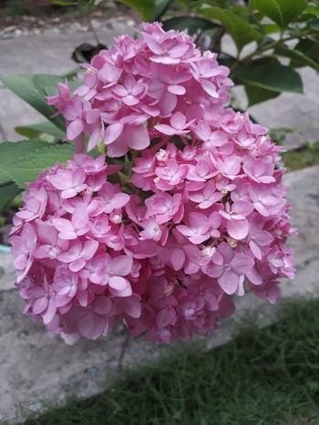 EyeemPhilippines Flower Flower Head Pink Color Water Close-up Plant Blooming Petal In Bloom