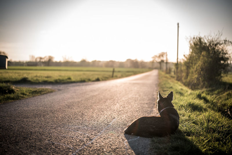 View of cat on road