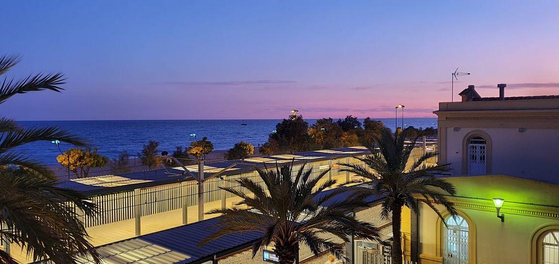 Sunset. Palm