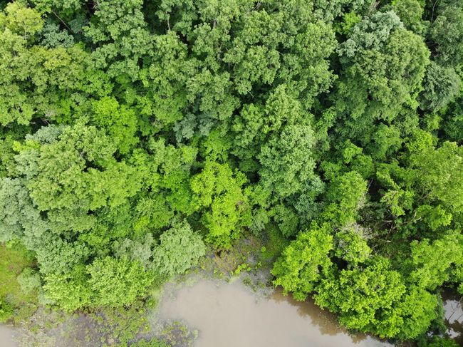 Aerial View Aerial Shot Aeriel Photo Dronephotography Tree Tops Nature Photography Nature Textures and Surfaces Texture Textured  Green Treelines Trees Forest Photography Forest Green Color Leaves Growing Woods Greenery Flora Countryside Lush Grassland Rugged