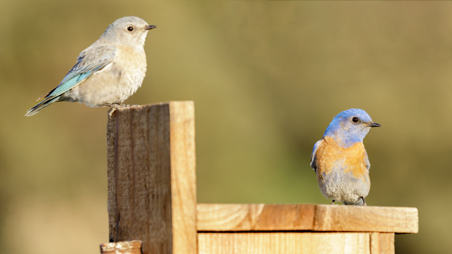 Close-up of birds perching on wooden post