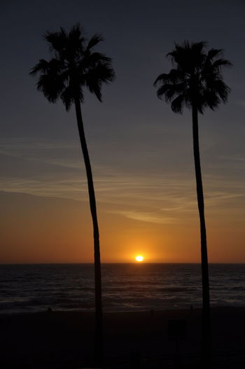 Beach Beach Life And Sunsets Beauty In Nature Horizon Over Water Nature No People Outdoors Palm Tree Scenics Sea Silhouette Sunset Tree Water