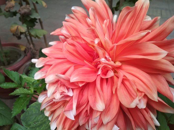 flower shades❤️