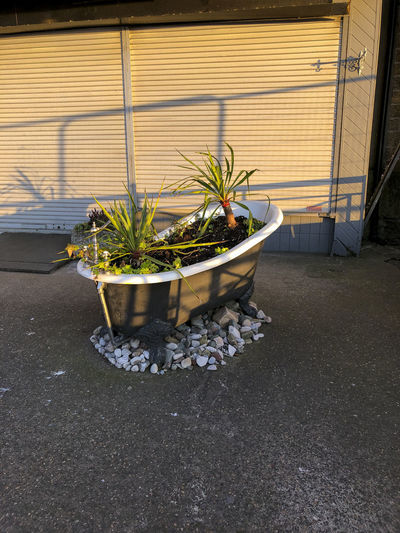 High angle view of potted plants on street