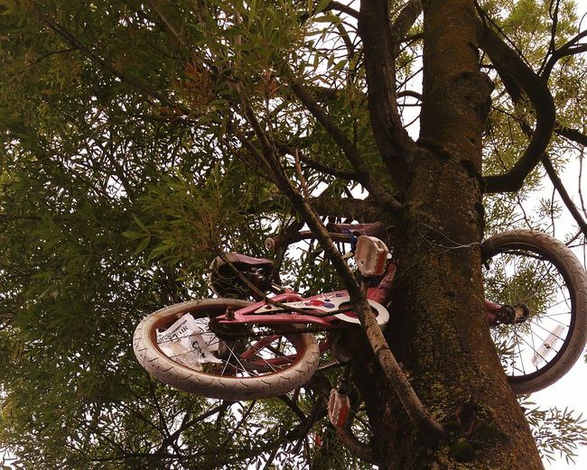 Crash landing Bike Bicycle Things In Trees Check This Out
