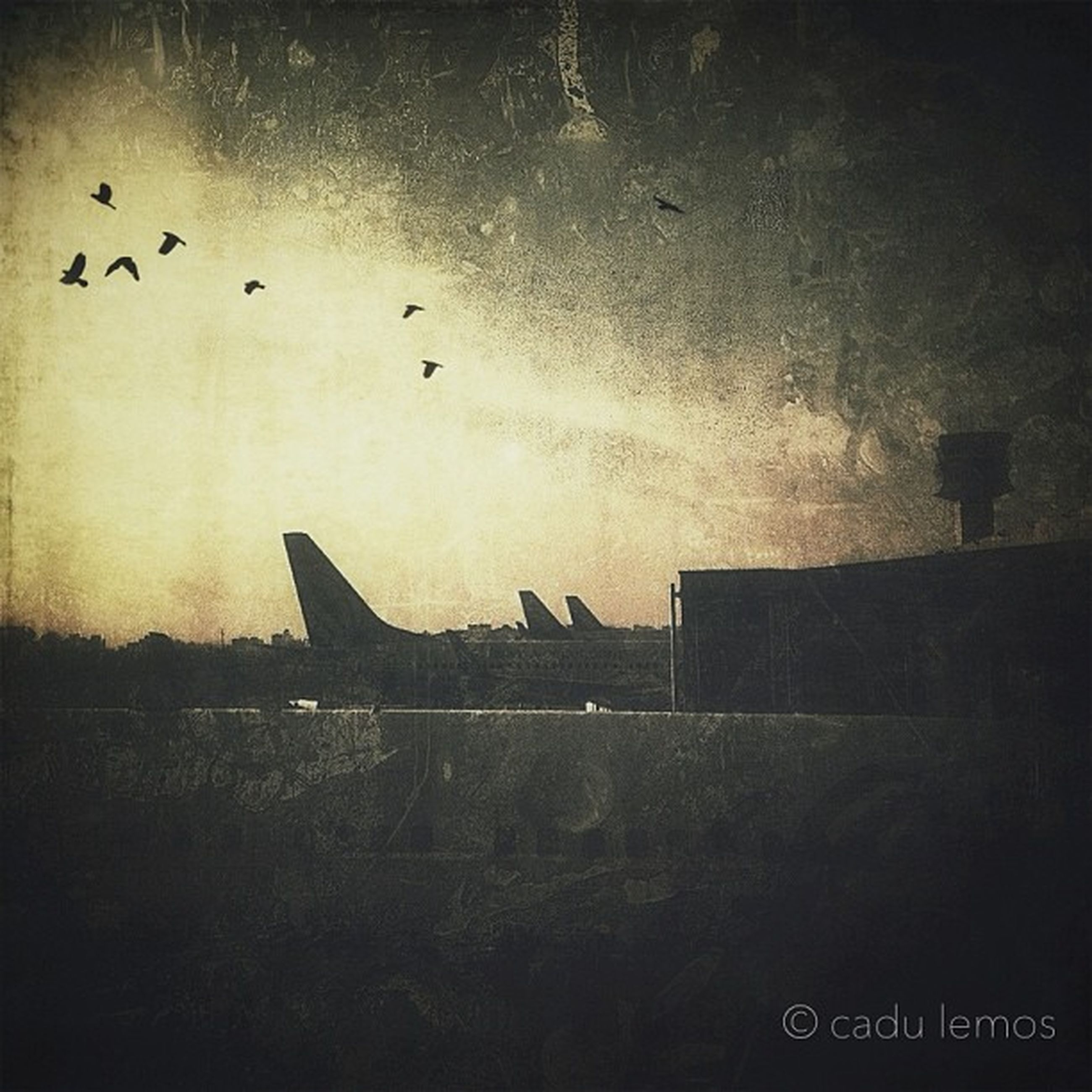 silhouette, flying, built structure, architecture, building exterior, bird, sky, low angle view, dusk, copy space, outdoors, no people, sunset, transportation, nature, night, dark, airplane, flock of birds