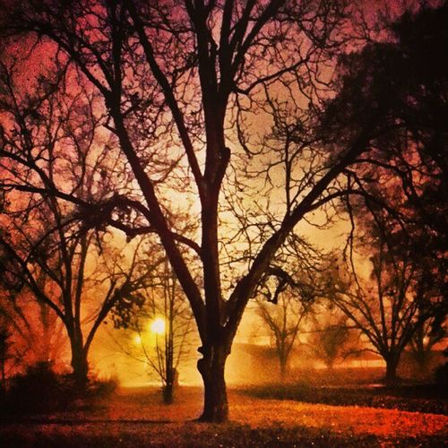 #Foggy #Christmas Dark Tagsta_nature Luna Tagstagram Stars Twlightscapes Noche Thestars Latenight Themoon Nightsky LastNight Lunar Night Nite Cool Nuture Nighttime Primeshots Moon Insta_sleep Photo Insta Foggy Igs Christmas Tagstagramers Star Tagsta