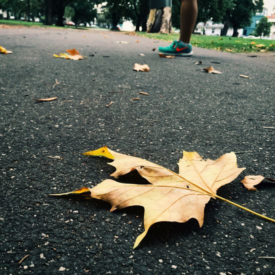 Looks like Summer is almost collapsed into Autumn soon... Fallenleaves Eveningwalk CarltonGardens Streetphotography Melbourne