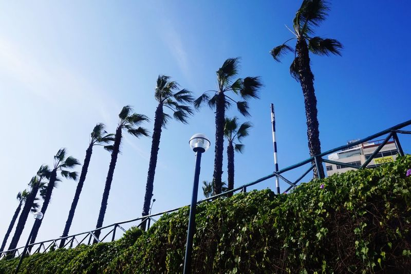 Low Angle View Growth Sky Day Outdoors Tree Clear Sky Plant No People Built Structure Architecture Palm Tree Nature Building Exterior Beauty In Nature EyeEmNewHere Perspectives On Nature