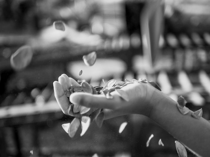 Close-up of hand holding petal