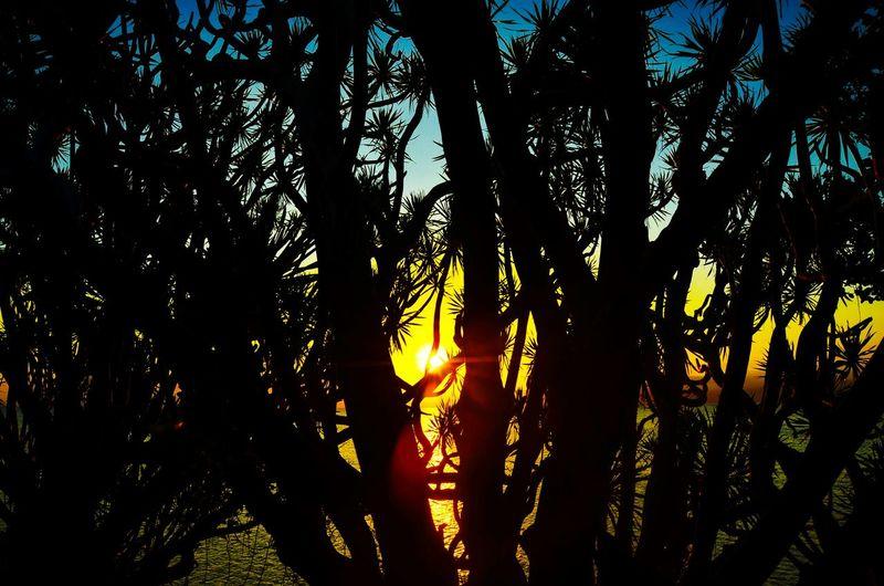 escape the ordinary Neverstopexploring  Wanderlust Explore The World Lifeofadventure Sunset Nature The Great Outdoors - 2017 EyeEm Awards EyeEmNewHere Sommergefühle